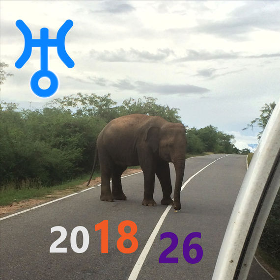 Elephant on the road