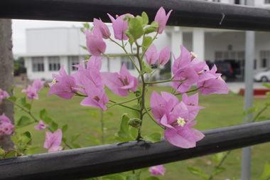 Цветы у полицейского участка