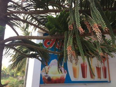 At Rio Ice Cream