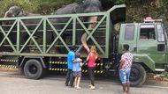 Перевозка слонов