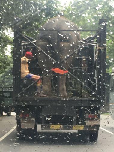 Слон в грузовике