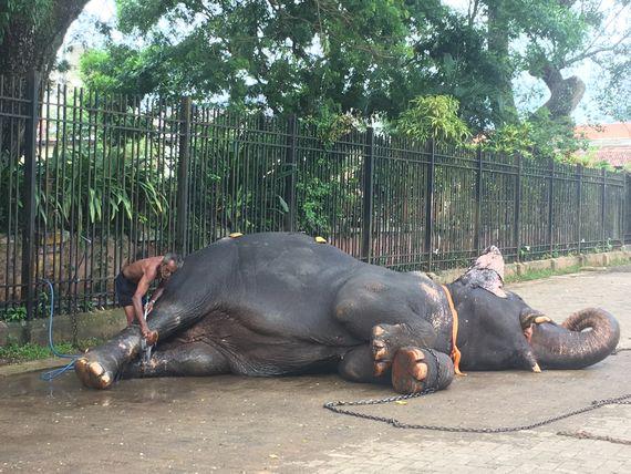 Мытье слона