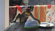 Голодная обезьяна