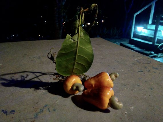 Свежий плод кешью