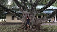 Ficus Trimenii (Moraceae)