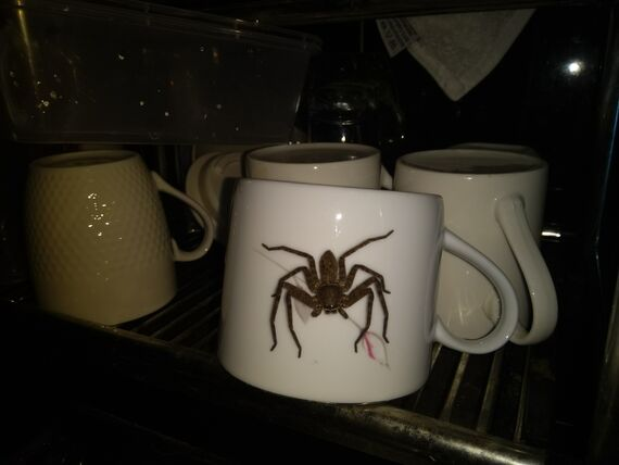 Spider Coffee Cup